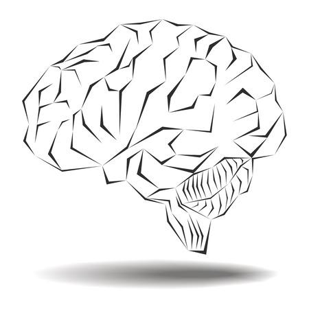 Angular geometric representation of the human brain Vector