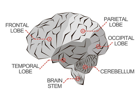temporal: Anatomy of the brain as abstract monochrome illustration