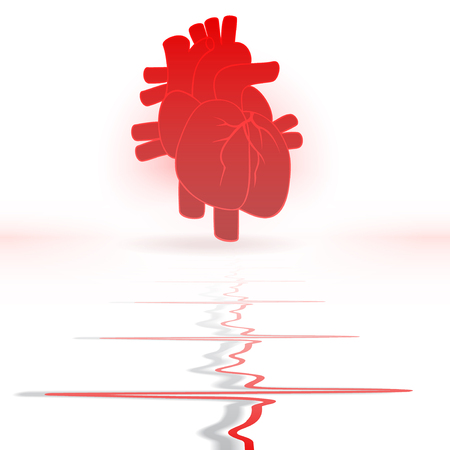 taking pulse: Heart and heartbeat