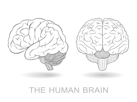 neural: Human brain in two perspectives on a white background. Without a difficult and transparency effects. EPS8 only