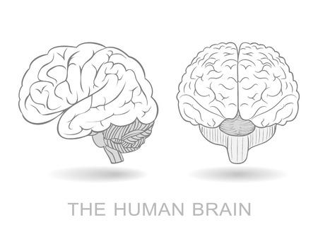 의식: Human brain in two perspectives on a white background. Without a difficult and transparency effects. EPS8 only