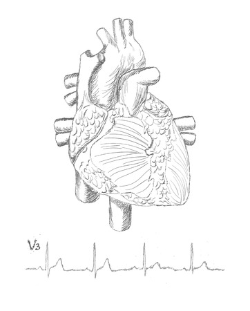 ventricle: Sketch of heart and cardiogram isolated on white Stock Photo