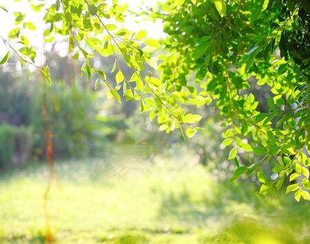 Twigs: Tree leaves illuminated with sunlight.