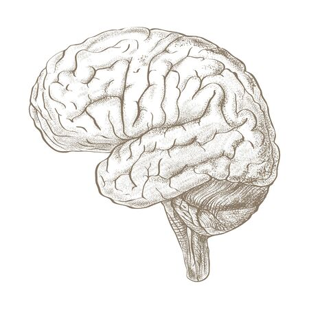 Brain as a pencil sketch style image.