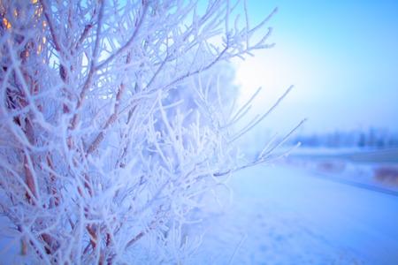 defocussed: Impersonation of winter. Background in defocus