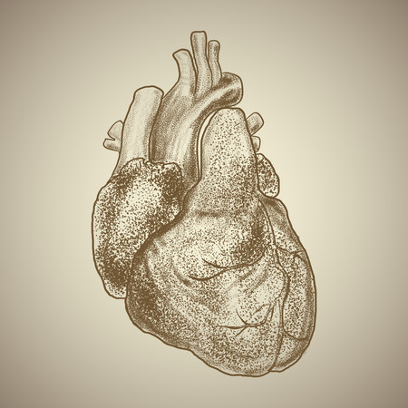 Human heart. Exterior appearance with vessels and other anatomical elements