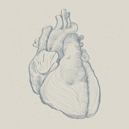 Human heart in painted image 向量圖像