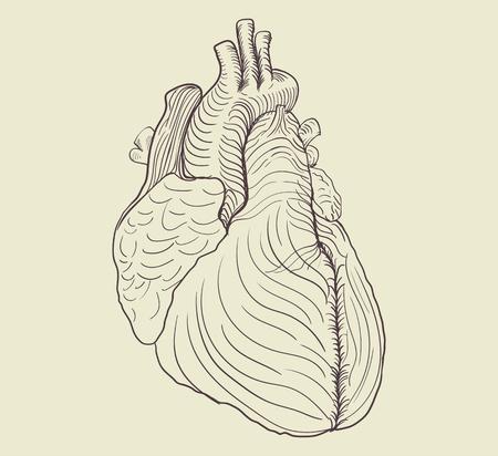 Pencil drawing of human heart 向量圖像