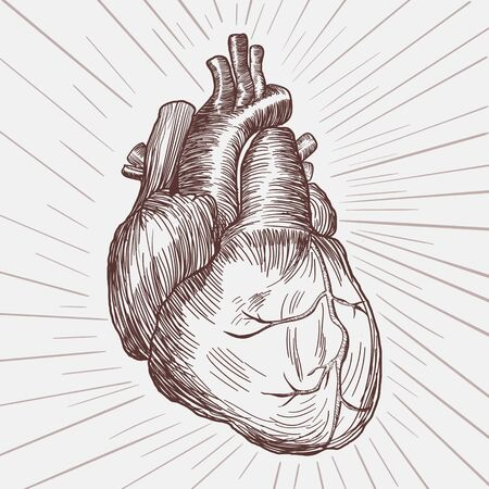 Retro styled drawing of human heart