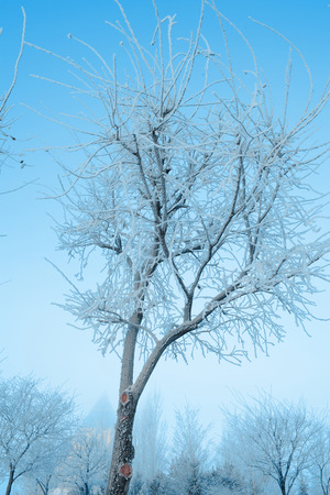 Ice glazed young tree in the urban park on the background of blue sky.