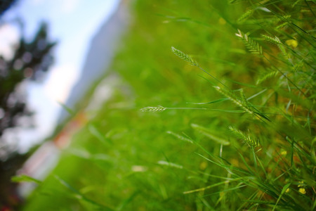 Green grass on the forest meadow. 版權商用圖片
