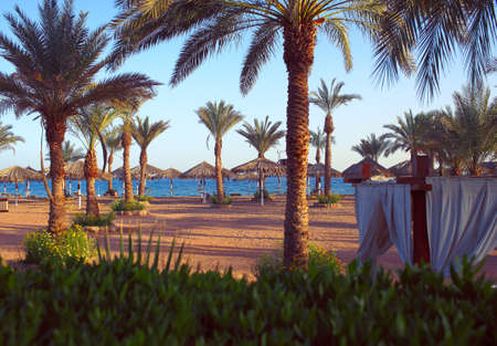 Seaside view with palm trees and beach umbrellas in the morning sunlight.