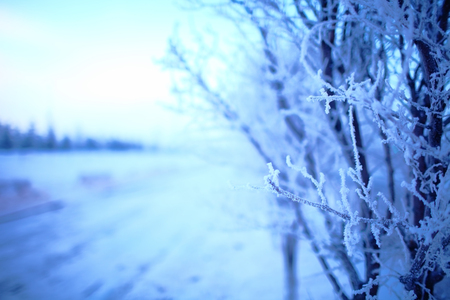 Tree covered with hoarfrost on the winter road. Stock Photo