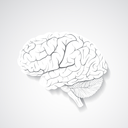 Vector human brain composed of paper