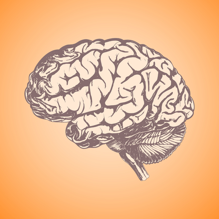 Human brain hand-drawn in brown tones as a blank for your design ideas