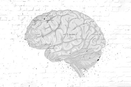 Vector drawn brain on a brick wall