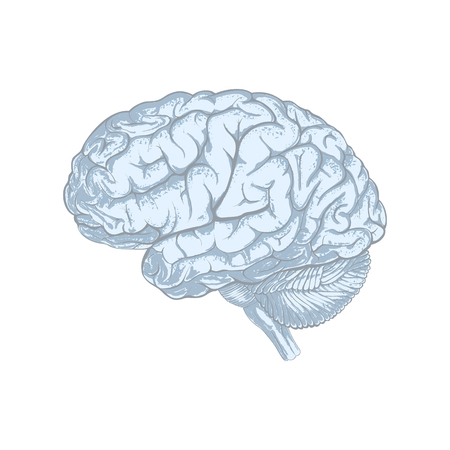 Sketchy style human brain abstract. Isolated on white background. Illustration Stok Fotoğraf