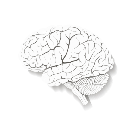 Human brain composed of paper with a shadow. Isolated on white background. Illustration