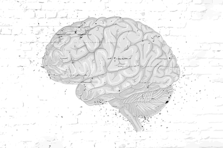 Hand-drawn brain on an old bleached brick wall