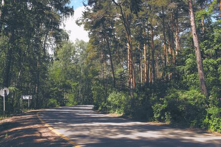 Roadway turn with traffic signs through the pine wood in the summer day.