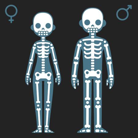 Gestileerde cartoon mannelijke en vrouwelijke skeletten met bijbehorende geslacht symbolen. Vector Illustratie