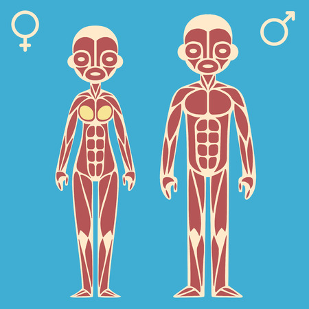 strong skeleton: Stylized cartoon male and female muscle charts with corresponding gender symbols. Illustration