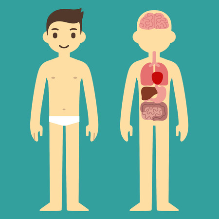 bowel: Stylized human body anatomy chart: skeletal, muscular, circulatory, nervous and digestive systems. Flat cartoon style.