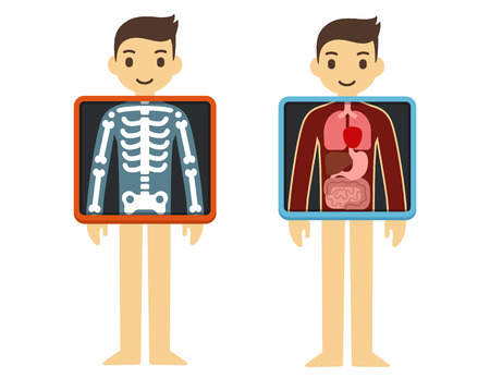 medical exam: Two illustrations of cute cartoon adult man with x-ray screen showing his internal organs and skeleton. Element of health infographics.