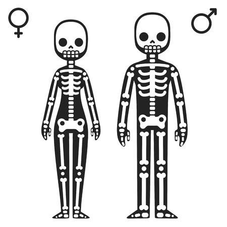 radiography: Stylized cartoon male and female skeletons isolated on white background.