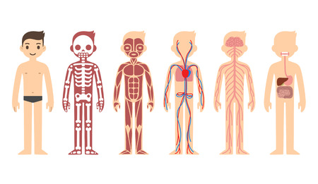 human body: Anatomy diagram