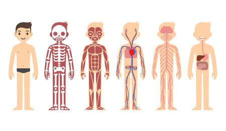 cuerpo hombre: Diagrama de Anatomía