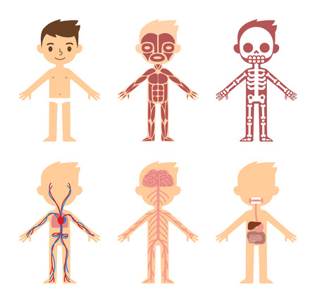 """anatomie humaine: """"Mon corps"""", tableau d'organe de corps de l'anatomie de l'éducation pour les enfants. Dessin animé mignon petit garçon et ses systèmes corporels: musculaires, squelettiques, circulatoires, nerveux et digestif. Illustration"""
