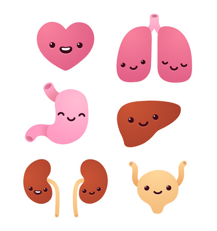 bladder surgery: Set of cartoon internal organs with cute smiling faces. Isolated vector illustration.