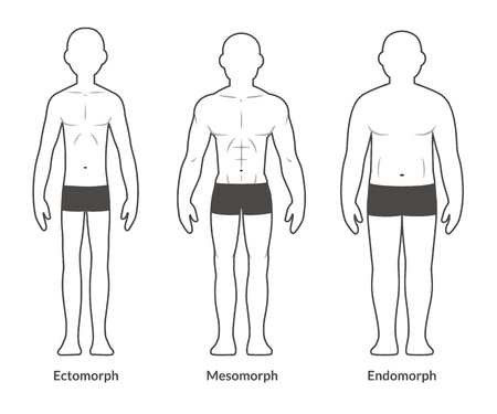 Male body types: Ectomorph, Mesomorph and Endomorph. Skinny, muscular and fat physique.