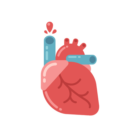 medicine and science: Stylized human heart anatomy icon. Modern flat cartoon style, bright and cute. Isolated vector illustration. Illustration