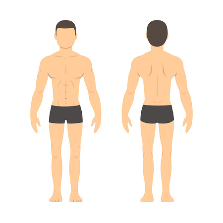 physique: Athletic male body chart. Muscular man body from front and back. Isolated health and fitness illustration.