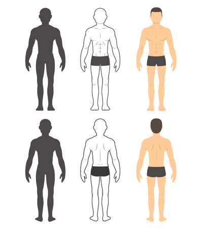 male body: Male body chart. Muscular man front and back in silhouette, line and color. Isolated vector illustration.