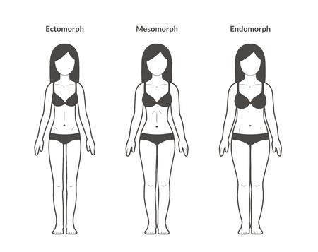 Tipos de cuerpo femenino: Ectomorph, Mesomorph y Endomorph. Construcción delgada, en forma y con sobrepeso. Ilustración de fitness y salud.
