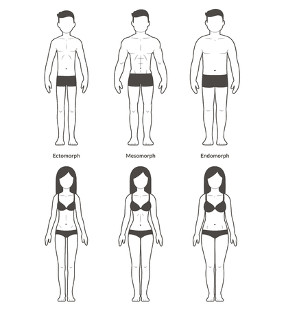 proportions of man: Male and female body types: Ectomorph, Mesomorph and Endomorph. Skinny, muscular and fat bodytypes. Fitness and health illustration.