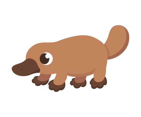 aussie: Cartoon platypus illustration. Cute little platypus isolated on white.