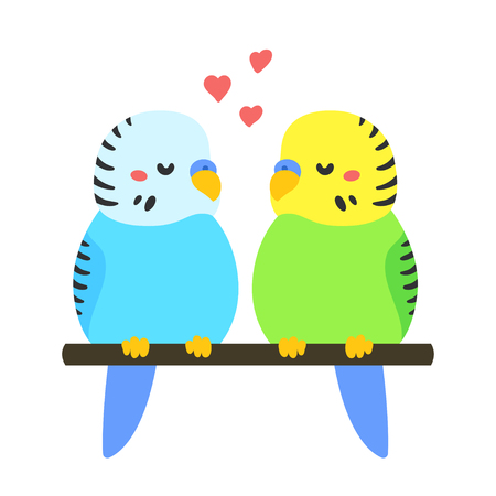 parakeet: Cute parakeet couple in love. Hand drawn cartoon budgies perched on branch, adorable bird illustration. Valentines day greeting card.