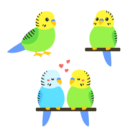 parakeet: Cute cartoon budgie vector illustration set. Little parakeet bird standing, sitting and couple. Illustration