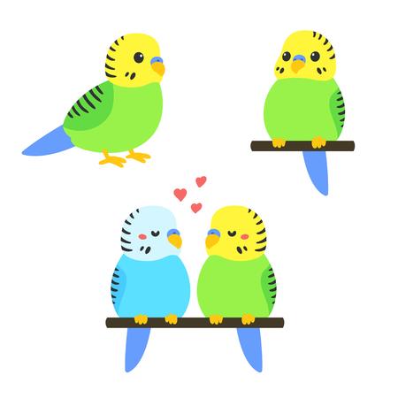 Cute cartoon budgie vector illustration set. Little parakeet bird standing, sitting and couple. Illustration