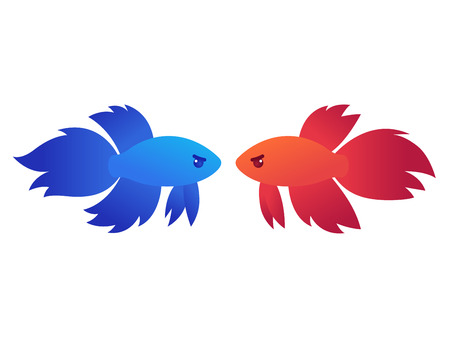 Red and blue siamese fighting fish (Betta Splendens) in standoff, isolated vector illustration.