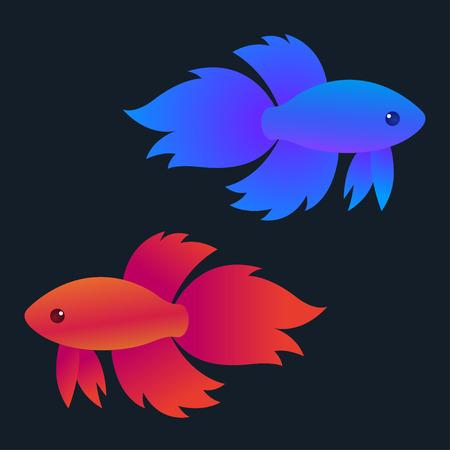 Red and blue siamese fighting fish (Betta Splendens) on dark background, bright vector illustration.