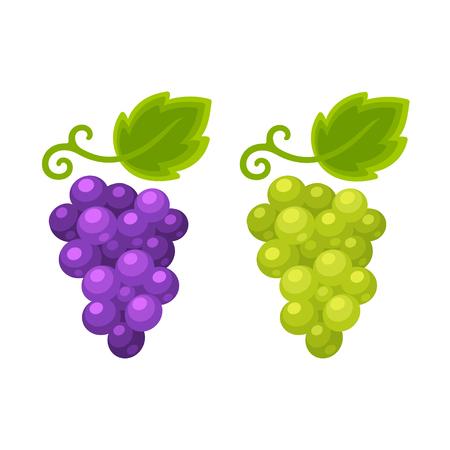 white grape: Red and white grapes isolated cartoon illustration, grape types set. Wine vector logo art. Illustration
