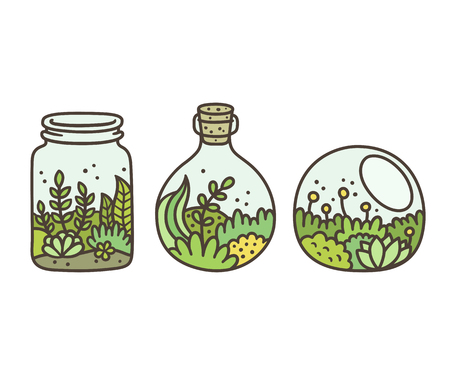 glass jars: Plants in terrariums set. Moss, succulents and flowers in glass jars. Hand drawn doodle style vector illustration. Illustration