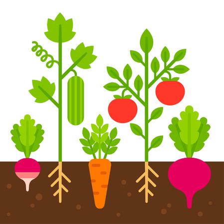 Huerto, ilustración vectorial de dibujos animados plana simple. Lindos vegetales brillantes plantados en el suelo. Vectores