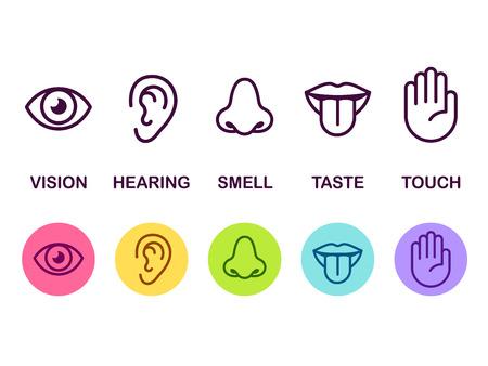 Icon set van vijf menselijke zintuigen: visie (oog), geur (neus), gehoor (oor), aanraking (hand), smaak (mond met tong). Eenvoudige lijnpictogrammen en kleurencirkels, vectorillustratie.