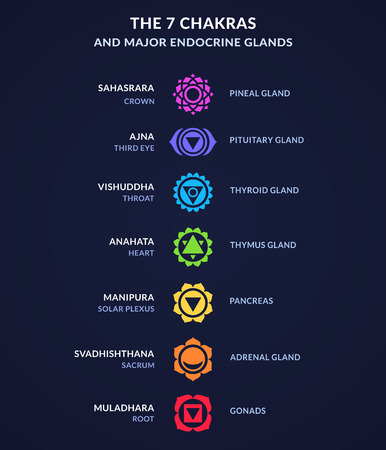 Infographic on body Chakras and corresponding endocrine system glands in human anatomy. Modern flat geometric style chakra icons. Illustration